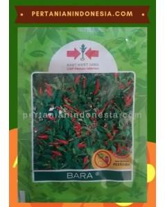 Benih Cabe Bara  PT East West Seed ( Ewindo )