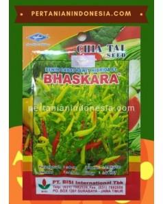 Benih Cabe Bhaskara
