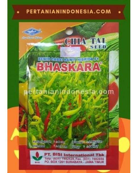 Benih Cabe Bhaskara  PT BISI International ( BISI )