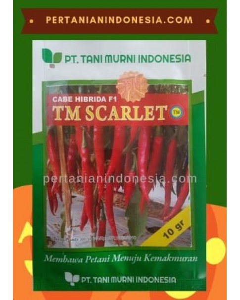 Benih Cabe TM Scarlet