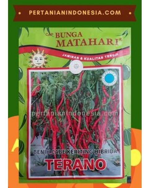 Benih Cabe Terano Matahari Seed