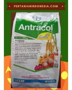 Fungisida Antracol 70 WP