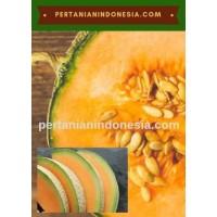 Jual Benih Bibit Rock Melon Murah Stok Lengkap