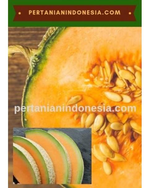 Benih Benih Bibit Rock Melon