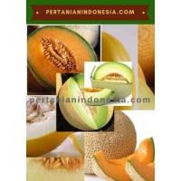 Jual Benih Melon Anti Virus Murah Stok Lengkap