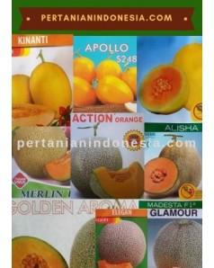 Benih Melon Kuning