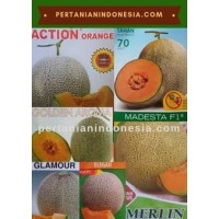 Jual Benih Rock Melon Murah Stok Lengkap