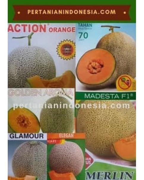 Benih Rock Melon