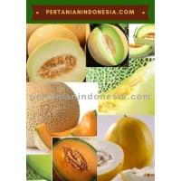 Jual Bibit Melon Murah Stok Lengkap