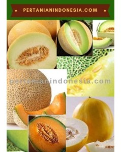 Benih Bibit Melon