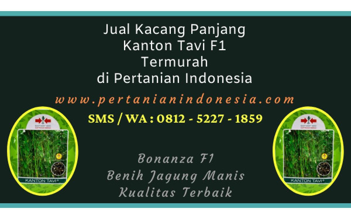 Jual Kacang Panjang Kanton Tavi F1 Termurah di Pertanian Indonesia