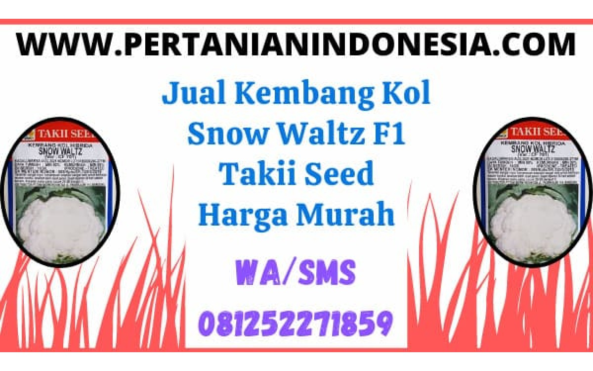 Jual Kembang Kol Snow Waltz F1 Takii Seed Harga Murah