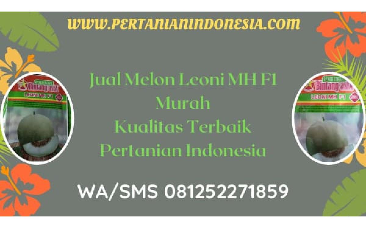 Jual Melon Leoni MH F1 Murah Kualitas Terbaik Pertanian Indonesia