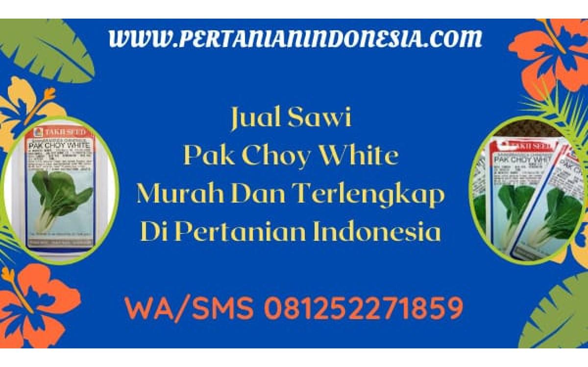 Jual Sawi Pak Choy White Murah Dan Terlengkap Di Pertanian Indonesia