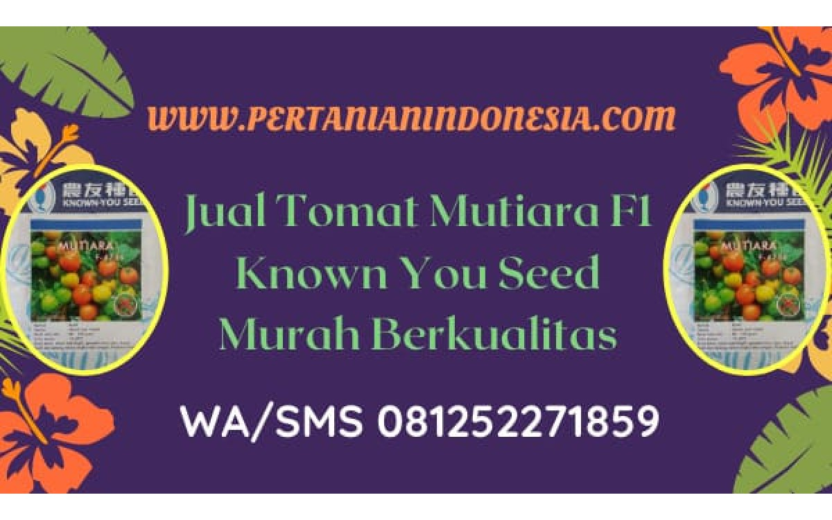 Jual Tomat Mutiara F1 Known You Seed Murah Berkualitas