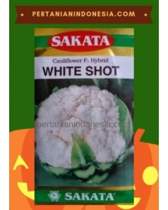 Benih Kembang Kol White Shot