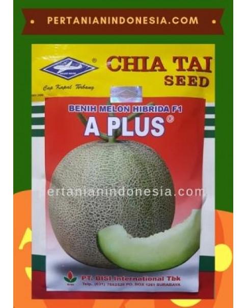 Benih Melon A Plus