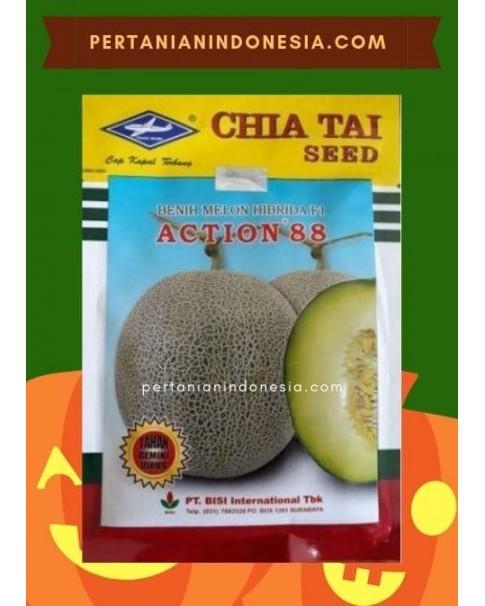 Benih Melon Action 88