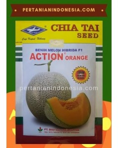 Benih Melon Action Orange