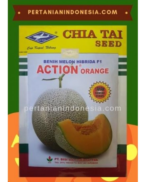 Benih Melon Action Orange