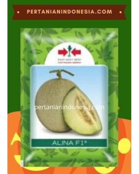 Benih Melon Alina