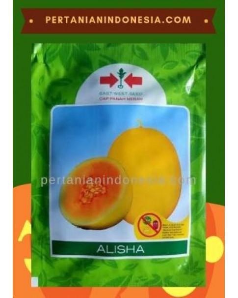 Benih Melon Alisha