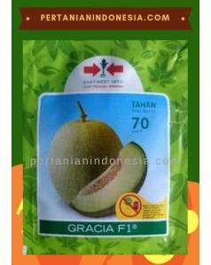 Benih Melon Gracia