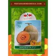 Melon Madesta