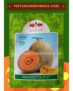 Benih Melon Madesta