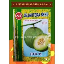 Melon STR 11