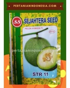 Benih Melon STR 11