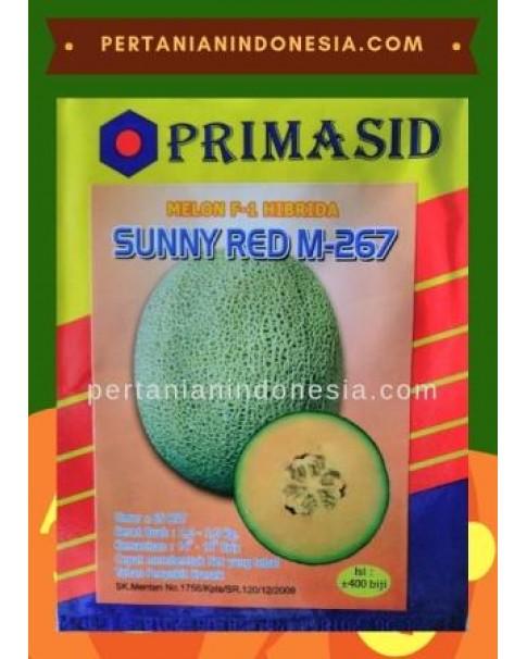 Benih Melon Sunny Red