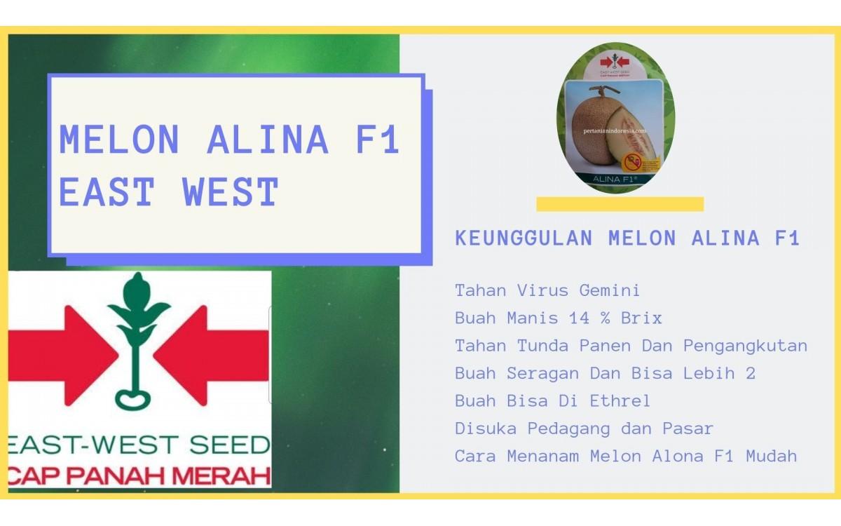 Alina F1 Melon Anti Virus Peluang Usaha Favorit Petani