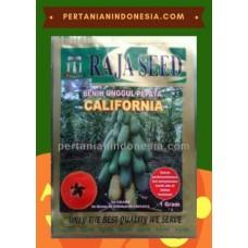 Pepaya California Raja Seed