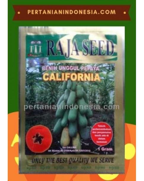 Benih Pepaya California Raja Seed