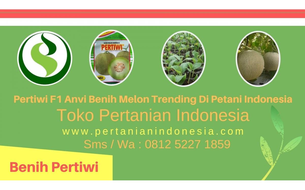 Pertiwi F1 Anvi Benih Melon Trending Di Petani Indonesia