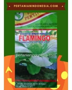 Benih Sawi Flamingo