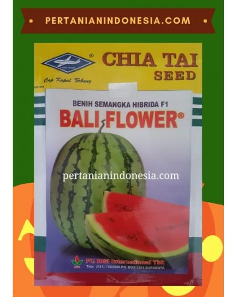 Benih Semangka Bali Flower