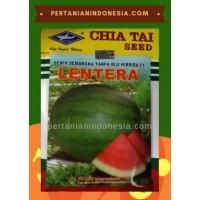Semangka Lentera