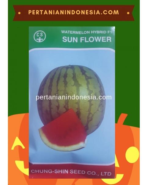 Benih Semangka Sun Flower