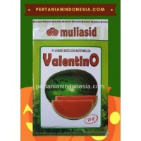 Semangka Valentino