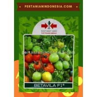 Tomat Betavila