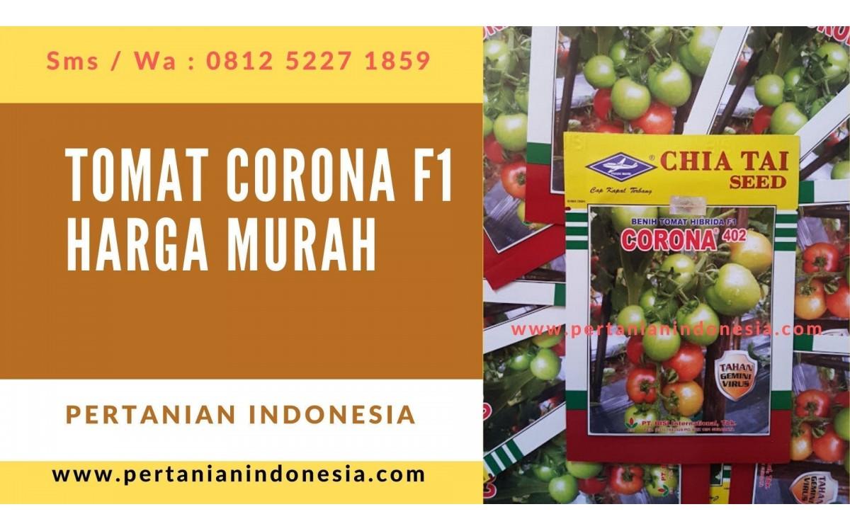 Corona F1 Benih Tomat Bisi Anti Virus Dijual Harga Murah