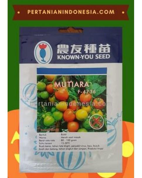 Benih Tomat Mutiara Known You Seed