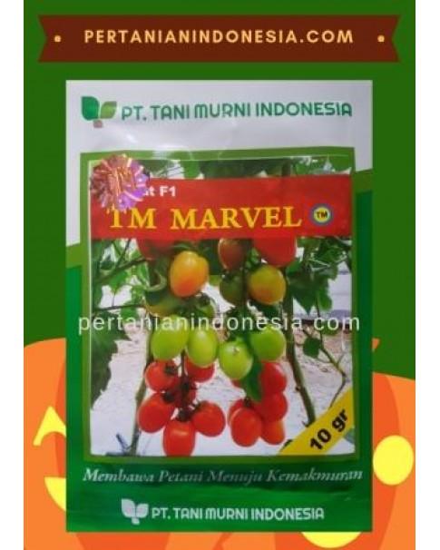 Benih Tomat TM Marvel