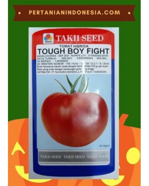 Benih Tomat Tough Boy Fight