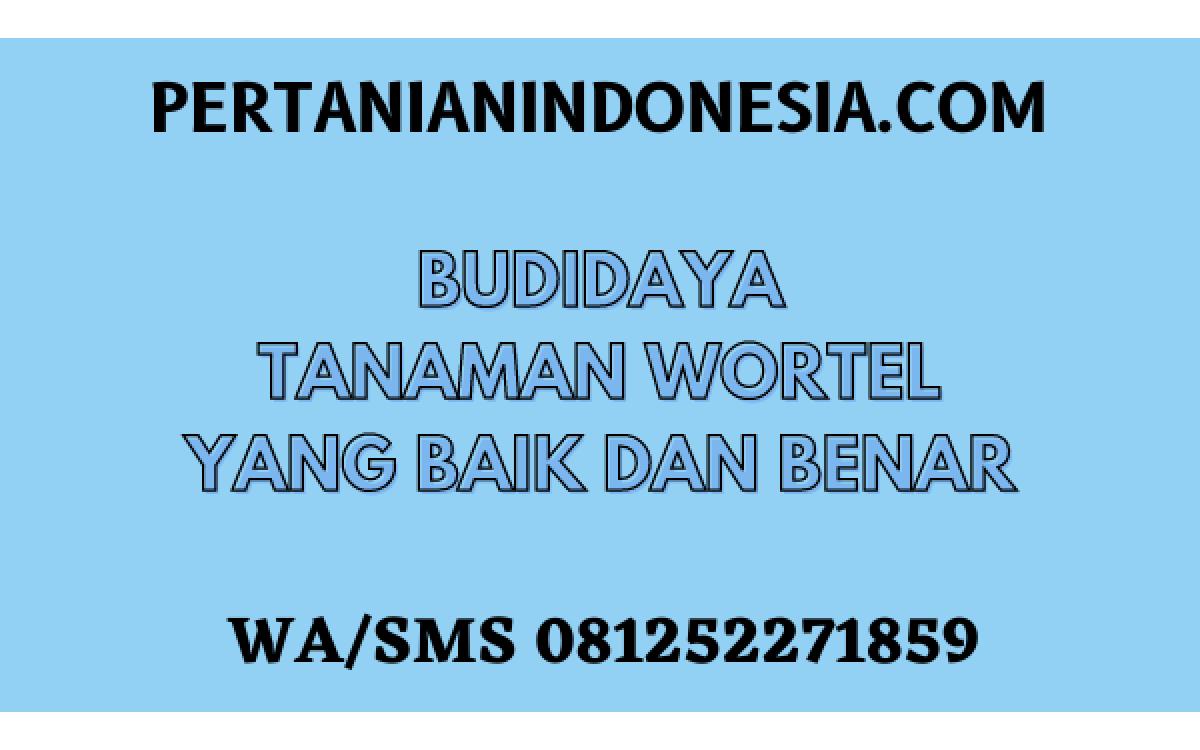BUDIDAYA TANAMAN WORTEL YANG BAIK DAN BENAR 11