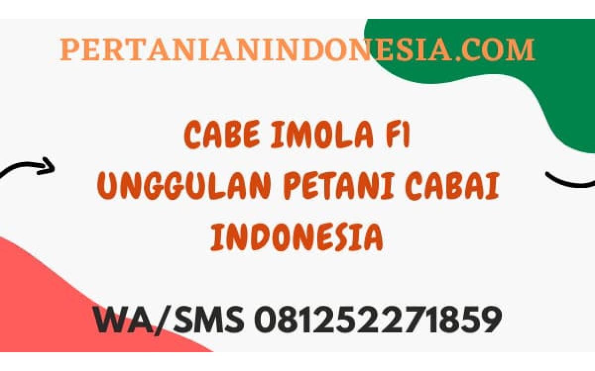 Cabe Imola F1 Unggulan Petani Cabai Indonesia