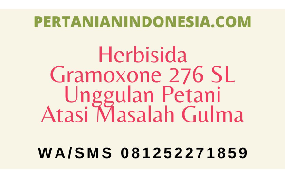 Herbisida Gramoxone 276 SL Unggulan Petani Atasi Masalah Gulma