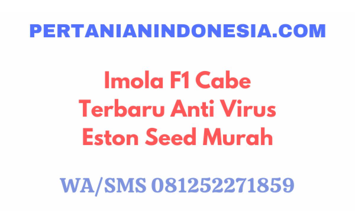 Imola F1 Cabe Terbaru Anti Virus Eston Seed Murah